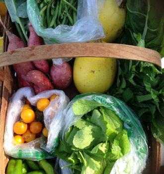 CSA week 15: fall crops coming in