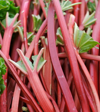 Rhubarb, a Sign of Spring