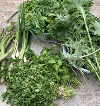 CSA week 4: spinach & other greens