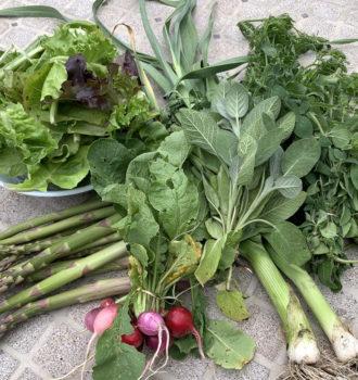 CSA week 6: asparagus, herbs and radishes