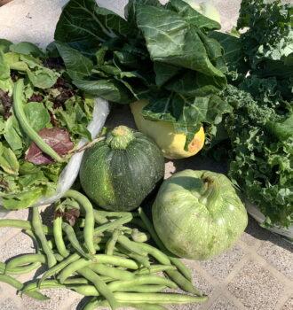 CSA week 10: summer veggies