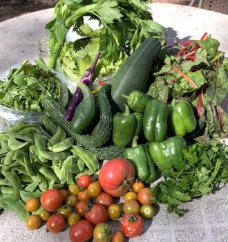 CSA week 17: chard, celery, peppers