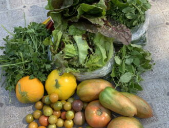 CSA week 18: tomatoes, chard, green herbs