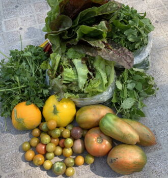 CSA week 18: tomatoes, chard, green herbs