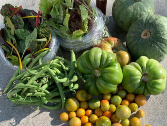 CSA week 20: squash, green tomatoes