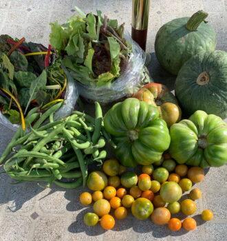 CSA week 20: squash, green tomatoes